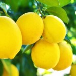 Healthy eating and nutrition_lemons are good for your liver try this whole lemon liver drink
