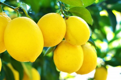 Healthy eating and nutrition_lemons