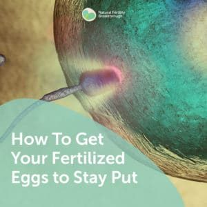 66-How-To-Get-Your-Fertilized-Eggs-to-Stay-Put